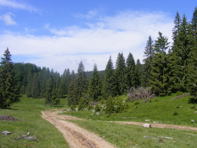 2008_06230023
