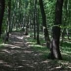 Traseu in Padurea Faget